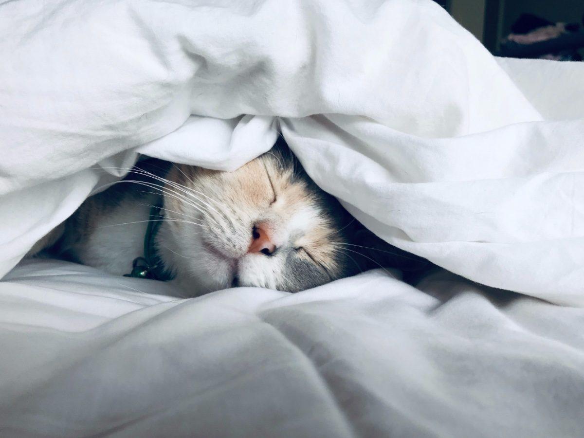 prueba de VIH reactivo gatito