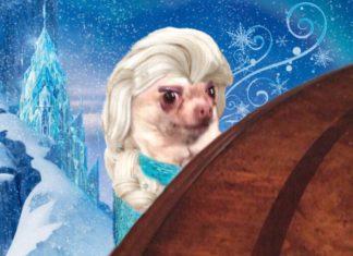 memes Elsa Frozen