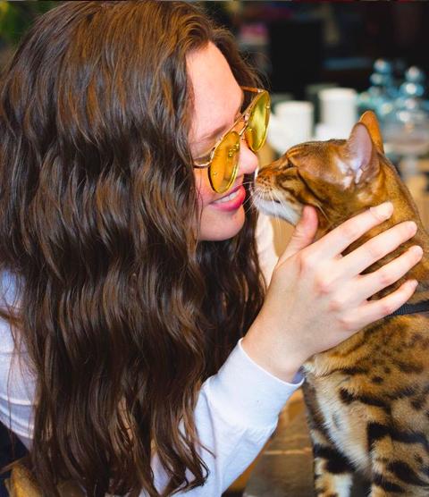LGBT+ gatos