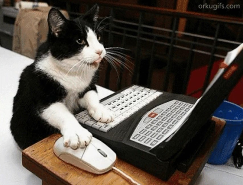 gatito computadora