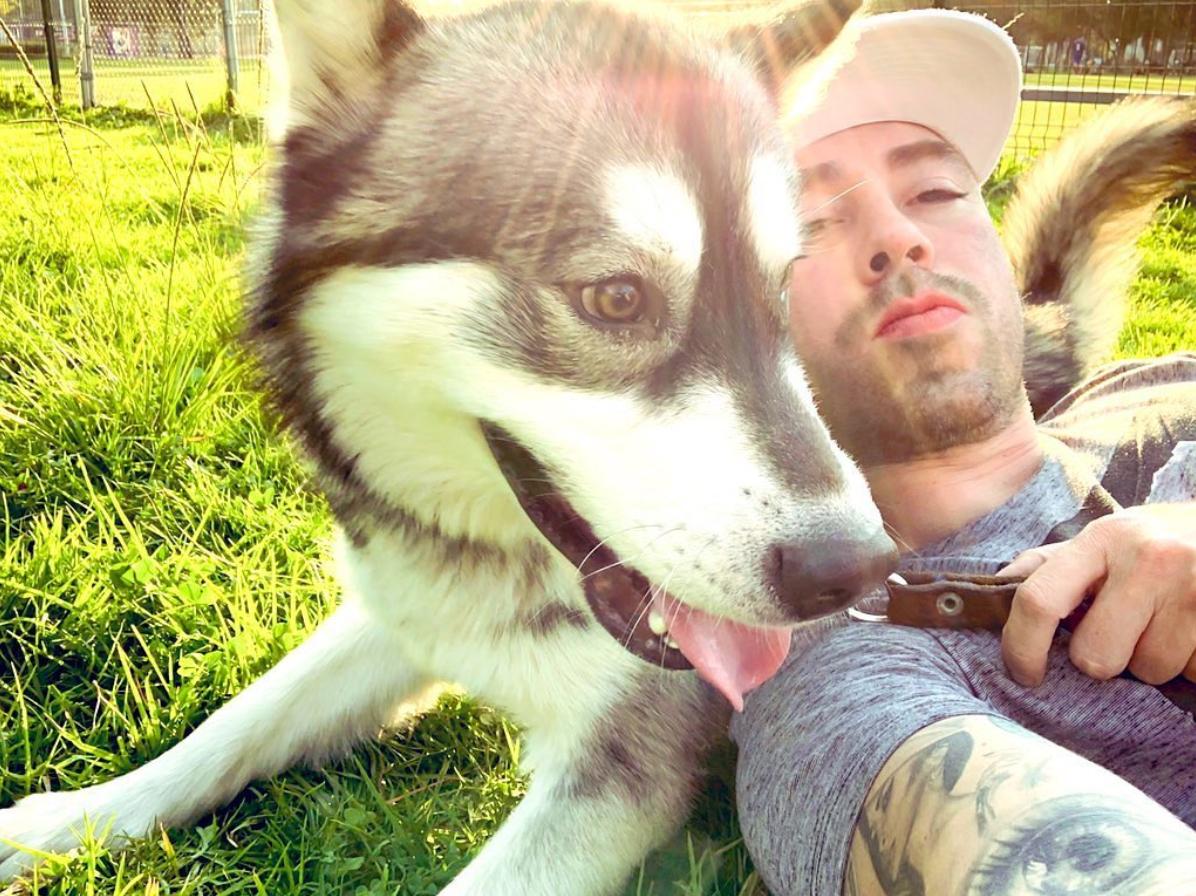 rescate animal perritos